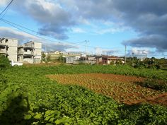 Great Value in La marie   3 plots of land for sale at MUR 11K per Toises. Hurry up and call !  http://realestatemauritius.mu/index.php?option=com_listing&view=listing&id=12481