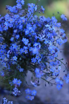 forget-me-not flowers. Your flowers son.. Blue your favorite color and I will never forget you.. <3