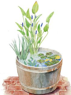 How to create small garden that's perfect for your patio.