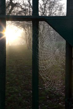 Spiderweb at sunrise Spider Art, Spider Webs, Witch Cottage, Window View, Through The Window, Windows, Mother Nature, Sunrise, Weaving