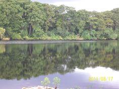 sliver lake ocala florida   reflections  Sept.6th 2012 ....  Candis N.