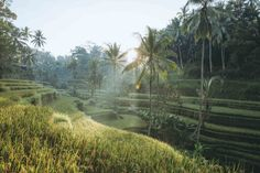 Tegalalang Rice Terraces, Bali