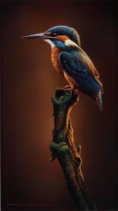 Wayne Westwood — Kingfisher (450×801)