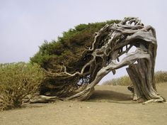 The Most Unusual Trees in the World - Page 2 of 4