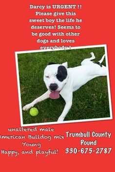 URGENT!!! >>>> http://www.petfinder.com/pet-search?shelterid=OH650 WARREN, OHIO>>>