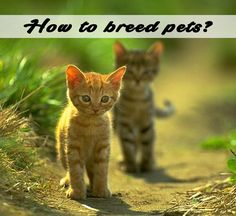 Breeding pets isn't an easy decision and require a lot of thinking. This process can be an exciting experience if you are ready to take over the responsibilities. Before you start raising pets, your need to make some important decisions. Here is what you need to reconsider and what changes you need to make.
