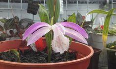 Orchideaceae... beautiful