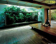 Takashi Amano's BIG Planted Tank - GTA Aquaria Forum - Aquarium Fish & Plants serving the Greater Toronto Area.