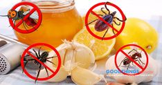 21 Remedies To Create Your Home Pest-Free - https://goodthingstoknow.co/remedies-home-pest-free/