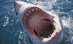 16 видов акул, которые обитают в Персидском заливе вблизи ОАЭ