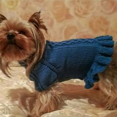 Knits For People /& Pooches  ASN  Sweaters