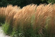 karl forester grass - Google Search