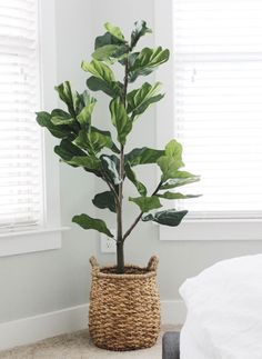 Faux fiddle leaf tree from qvc qvc fiddle leaf tree home home decor home ideas living room ideas design ideas design inspiration bedroom ideas faux plants faux tree affordable budget-friendly. Fake Plants Decor, House Plants Decor, Faux Plants, Garden Plants, Hanging Plants, Plants For Living Room, Potted Plants, Cactus Plants, Landscaping Plants