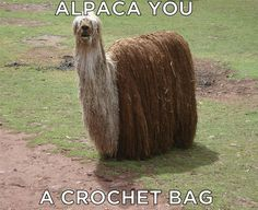 Alpacas Pack Your Bag For Vacation