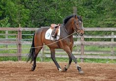 Tension in horses can lead to all kinds of problems and hinder their ability to learn.
