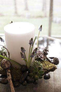 Grape hyacinth candle organics