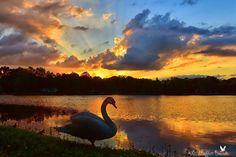 Sunset in Orlando, FL (). Photo by Breezeshooter. wunderground.com