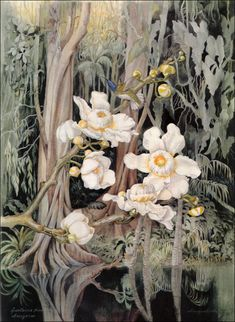 Margaret Mee. (1909-1988), English born, lived in Brazil