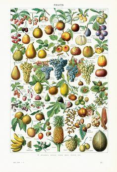 https://www.etsy.com/fr/listing/227612278/1930-fruits-planche-illustree-couleur?ref=shop_home_active_21