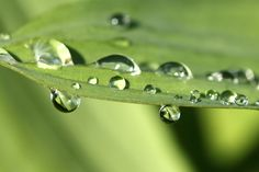 drops by Ralf Muhl on 500px