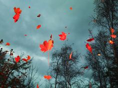 The 18 Most Magical Things About Autumn  - HouseBeautiful.com