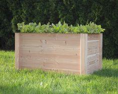 Neviete sa už dočkať jarných teplých dní? Spríjemnite si čakanie na jar zapojením sa do súťaže o vyvýšený záhon s Rastlinky.sk. Okrem možnosti vyhrať pre seba alebo svojich blízkych tento nádherný doplnok záhrady či terasy, získate prístup k bezplatným ochotným odborným pestovateľským konzultáciám so záhradníkmi, špeciálnym ponukám pre okrasnú, úžitkovú a balkónovú záhradku. Celkovo budú vyžrebované tri vyvýšené záhony dňa 15.5.2019. Terrace Garden, Begonia, Outdoor Furniture, Outdoor Decor, Outdoor Storage, Outdoor Structures, Gardening, Square Foot Gardening, Weed