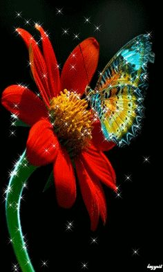 The perfect Flower Butterfly Glitter Animated GIF for your conversation. Discover and Share the best GIFs on Tenor. Flowers Gif, Butterfly Flowers, Beautiful Butterflies, Flower Art, Beautiful Flowers, Butterfly Video, Butterfly Pictures, Flower Pictures, Gif Bonito