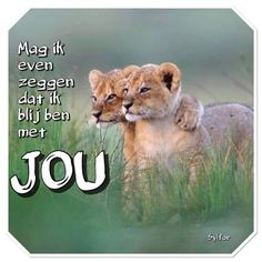 Love Notes, Panther, Lion, Animals, Quotes, Art, Everything, Leo, Quotations