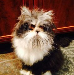 Watch out Grumpy Cat, there's a new feline in town. Atchoum is a nine-month-old cat from Quebec, Canada who suffers from hypertrichosis, a condition in which he experiences excessive hair growth. Basically, bad hair day every day for his entire life. His disheveled hair and those bright yellow eyes make him look like a mad scientist with […]