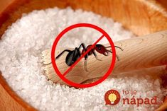 Combine salt and water in a ratio in a bottle. Spray the solution wherever you see ants congregating. Alternatively, just sprinkle some salt in those areas. House Cleaning Company, Cleaning Services Company, Household Cleaning Tips, Cleaning Hacks, Diy Hacks, Foam Roofing, Get Rid Of Ants, Esential Oils, Table Salt