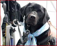 Differences Between Service Dogs, Therapy Dogs and Emotional Support Animals