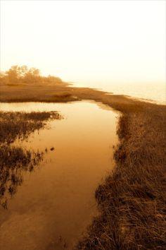 Harker\'s Island Marsh II