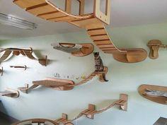 Un vrai paradis pour les chats chez vous !!