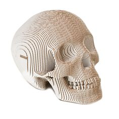 Vince Human Skull (cardboard)
