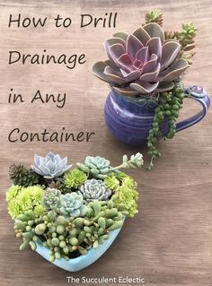 in Containers Without Drainage Drill Your Own Learn to drill drainage in ceramic and concrete. Now anything can be a beautiful succulent container!Learn to drill drainage in ceramic and concrete. Now anything can be a beautiful succulent container! House Plants, Plants, Container Plants, Succulents, Succulent Terrarium, Gardening For Beginners, Planting Herbs, Container Gardening, Succulent Garden Diy