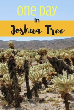 One Day in Joshua Tree National Park - you would surprised at all you can do in this spellbinding park in just one day, and it is day-tripping distance from both LA and San Diego Travel Joshua Tree National Park, National Parks, Joshua Tree Camping, Places To Travel, Places To Go, California Vacation, Southern California, California Camping, California Living