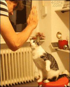 ヒャッハーーー!!猫画像の時間だァーーーーー!!:ハムスター速報