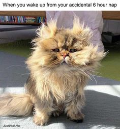 Funny Pictures Of Animals Doing Funny Things With Captions - JustViral.Net 42 Funny Pictures Of Animals Doing Funny Things With Captions - Funny Pictures Of Animals Doing Funny Things With Captions - JustViral. Animals Doing Funny Things, Cute Funny Animals, Funny Cute, Cute Cats, Funny Animal Memes, Funny Animal Pictures, Cat Memes, Cute Pictures, Funny Humor