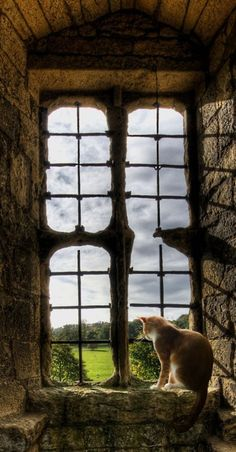 """""""In his castle, the cat is king; and I his vassal."""" --Margaret K Howland"""