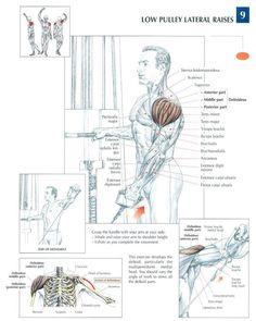 Shoulder #workout #gymrat