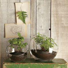 herbes aromatiques en pots de verre