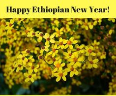 Ethiopian New Year Wishes Messages Quotes Greetings Images Sample Spring Flowers, Wild Flowers, New Year Wishes Messages, Small Yellow Flowers, Good Prayers, Greetings Images, Happy New Year 2018, Tumblr, Mellow Yellow