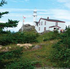 10 Unique Rainy Day Adventures in Gros Morne National Park Newfoundland And Labrador, Newfoundland Canada, Gros Morne, Marine Plants, Parks Canada, Honeymoon Destinations, Adventure Awaits, Day Trip, East Coast
