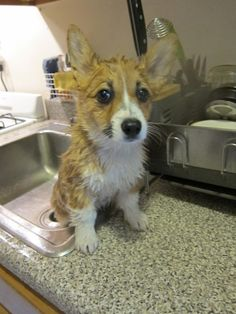I'm not a dish...Why you wash me?