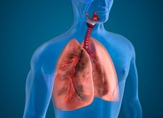Here, read more on airway clearance therapy in patients with lung disease and the different methods and devices used, including HFCWO vests. Natural Cancer Cures, Natural Cures, Knee Osteoarthritis, Sources Of Dietary Fiber, Fat Burning Detox Drinks, Purifier, Lung Cancer, Omega 3, Lunges