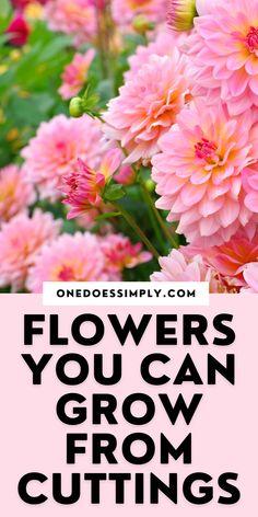 Growing Flowers, Love Flowers, Planting Flowers, Budget Flowers, Flowering Shrubs, Cuttings, Planting Seeds, Flower Seeds, Gardening Tips