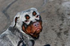 15 Perros personalizados por la naturaleza misma