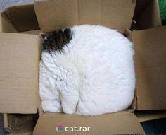 Square box kitty