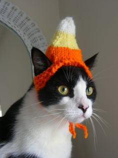 Looking for a Halloween gift for a cat lover. Which one of these home made cat hats would you recommend?
