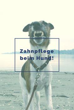 Ist Zahnpflege beim Hund für Dich ein Thema?